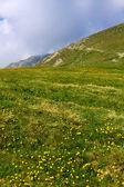 Wiese unter Iezer Spitze Parang Mountains in Rumänien — Stockfoto