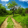 Rural road through meadow — Stock Photo