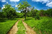 çayır ile kırsal yol — Stok fotoğraf