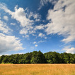 Forest of beech trees under blue sky - Stock Photo