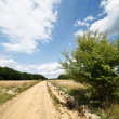 Landscape with dirt road - Lizenzfreies Foto