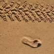 Traces in the sand — Stock Photo