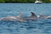 Dolphin family — Stock Photo