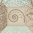 Nautilus shell background. — Stock Vector #6664687