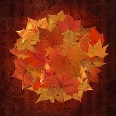 осенние листья круг фон — Стоковое фото