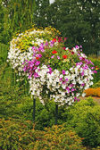 Colorful petunia hanging baskets — Stock Photo