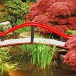 Stock Photo: Colorful japanese garden