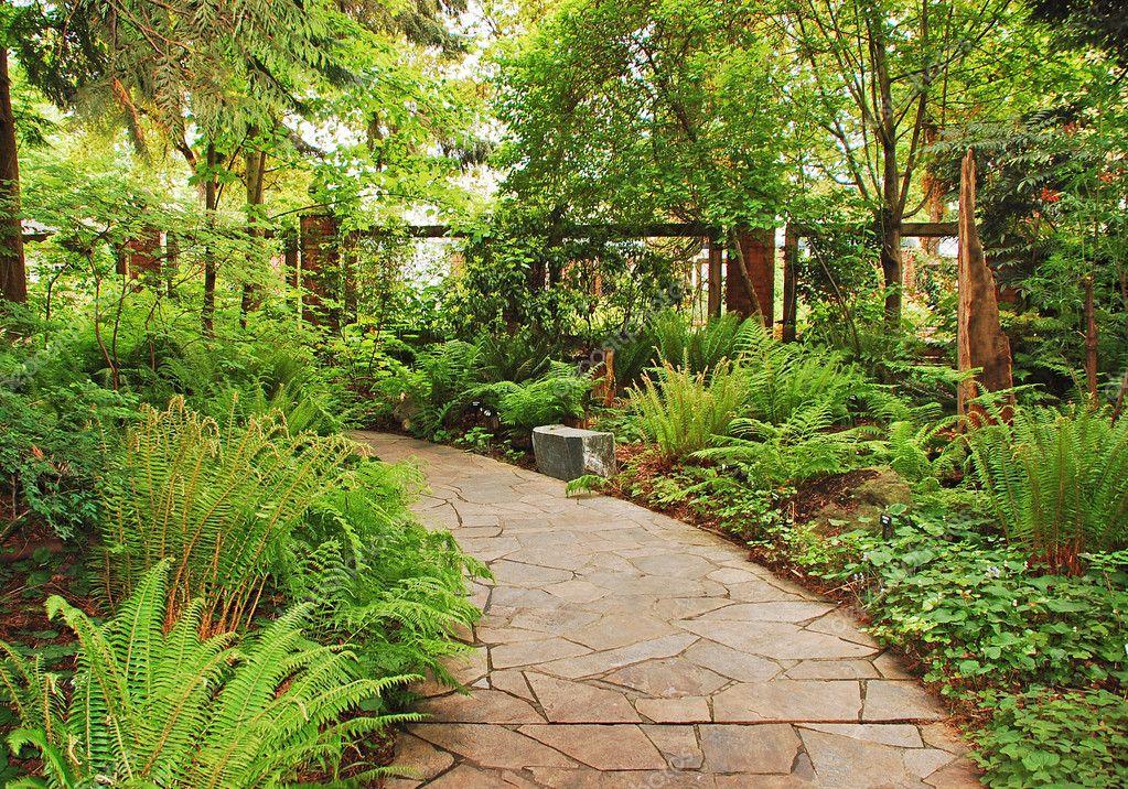 Папоротник в садовом дизайне