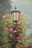 Lamp post with pink roses — Stock Photo