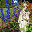 Delphinium garden — Stock Photo
