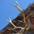 Antlers — Stock Photo #6404291