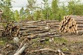 Log stacks — Stock Photo