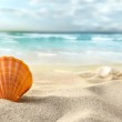 Shell on the beach — Stock Photo #5987459