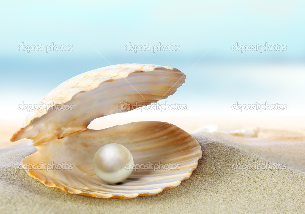 An open sea shell with a pearl Open Oyster Shell With Pearl