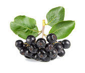 Black ashberry — Stock Photo