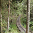 Forest railroad — Foto de Stock