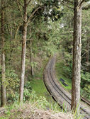 Forest railroad — Foto Stock