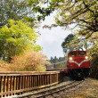 Forest train — Stock Photo