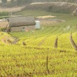 Farm of green onion — Stockfoto