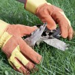 Royalty-Free Stock Photo: Work gloves are used for lawn care