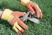 Work gloves are used for lawn care — Stock Photo