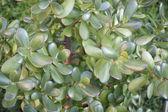 Floral fundo de folhas verdes de uma planta de casa — Foto Stock
