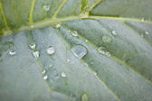 Dew drop is on the sheet plant — Stock Photo