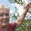 Elderly woman collects berries — Stock Photo