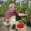 Woman reaps a crop of tomatoes — Stock Photo #6325577