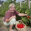 Woman reaps a crop of tomatoes — Stock Photo