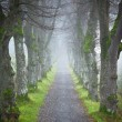 Autumn forest allee — Stock Photo