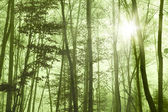 Forest foggy — Stock Photo