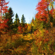 Beautiful autumn day in the woods — Stock Photo