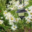 Solar lantern and daisies — Stock Photo