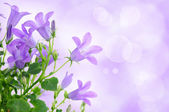 Purple flower background — Stockfoto