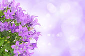 紫色花背景タツムリ — 图库照片