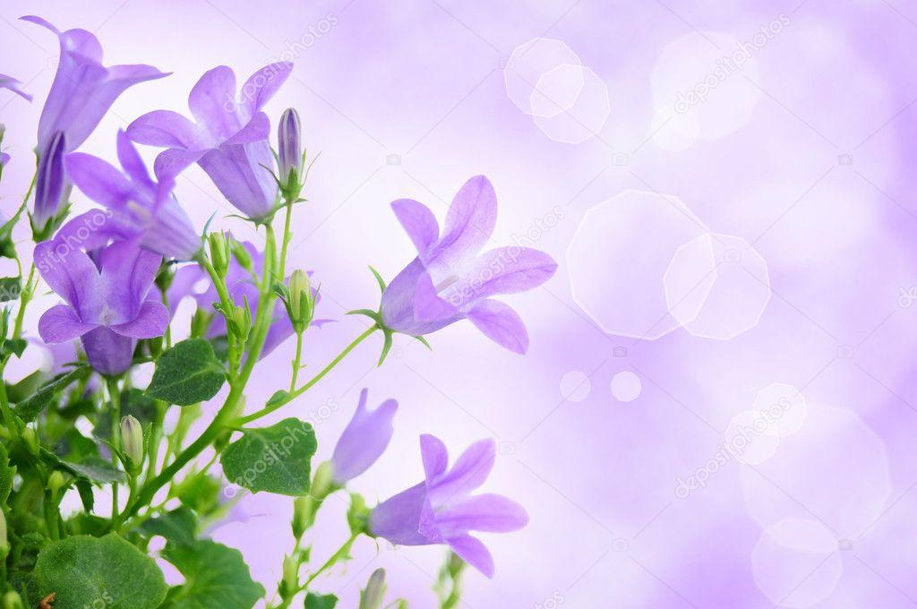 Фон цветочный размытый