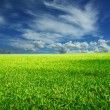 Infinite meadow — Stock Photo #5409754