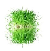 Grass from roots — Stock Photo