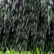 Rainstorm - Stock Photo