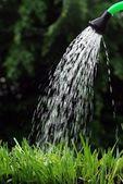 Watering can — Stok fotoğraf