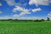 Green field and meadow — Stock Photo