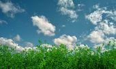 Keten gökyüzü arka plan üzerinde — Stok fotoğraf