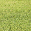 Manicured Grass Lawn — 图库照片