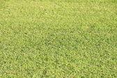 Manicured Grass Lawn — Stock Photo