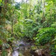 Royalty-Free Stock Photo: Stream in Lush Tropical Jungle