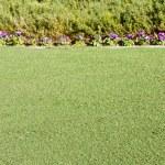 Purple Flowers Beyond Fresh Cut Green Grass — Stock Photo #5757565