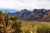 Woestijn bergen met evergreen en cactus op voorgrond — Stockfoto