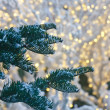 Snow on Fir Trees with Christmas Lights in Background — Стоковое фото #6019789