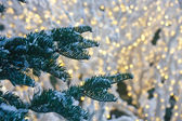 Snow on Fir Trees with Christmas Lights in Background — Stock Photo